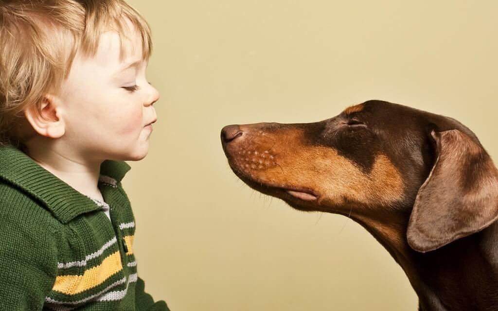 Фото: Собаки породы доберман вместе с ребенком