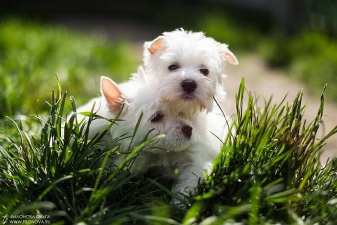 Вест в траве