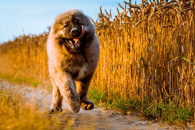 фото большой собаки