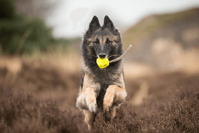 фото собаки