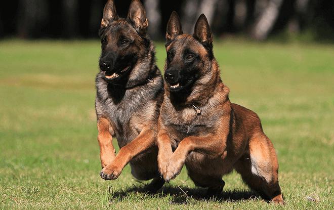 дрессировка собаки фото