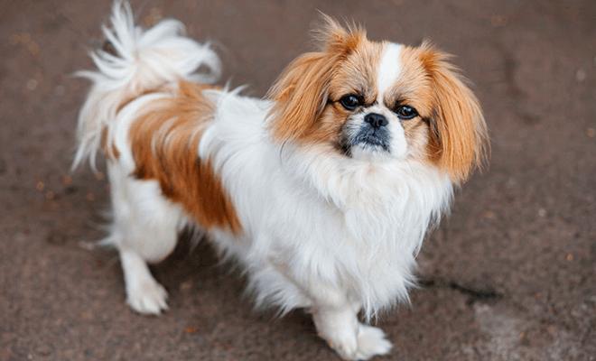 Породы собак, легко поддающиеся дрессировке. Список 10 самых умных ... | 400x660