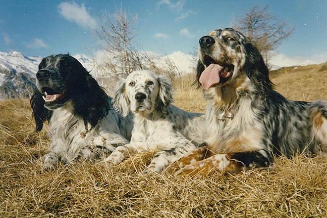 собаки на привале