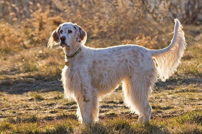 красивое фото собаки