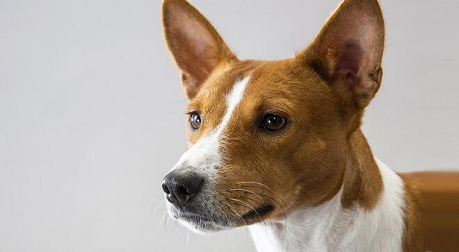 симпатичный пес