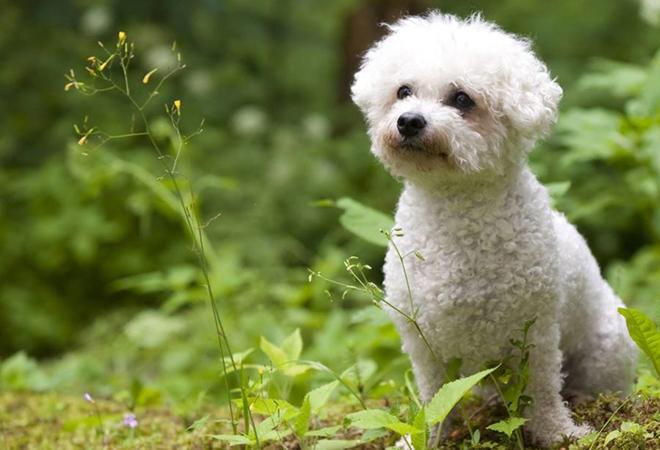 наблюдательные пес