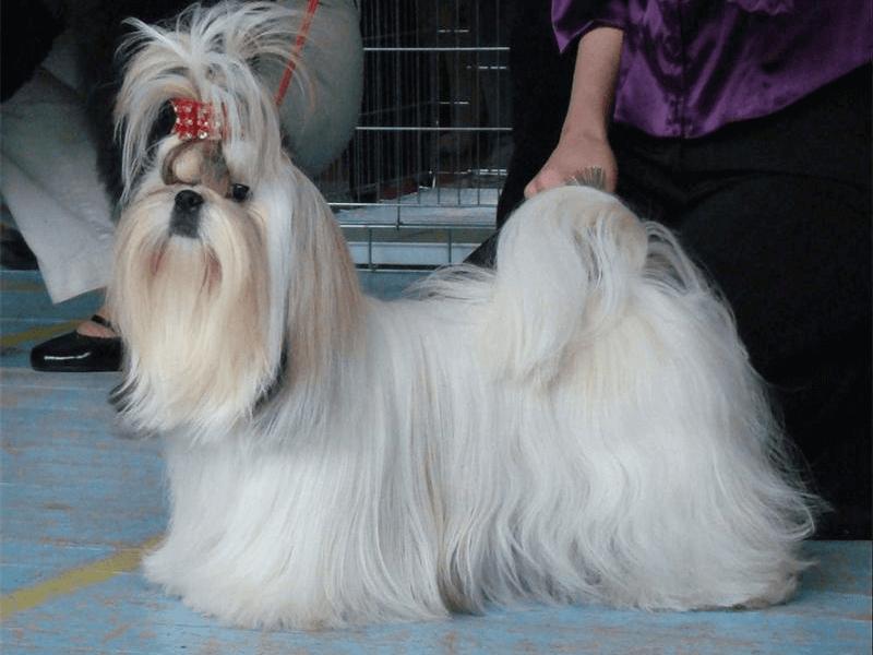 маленькая собака фото