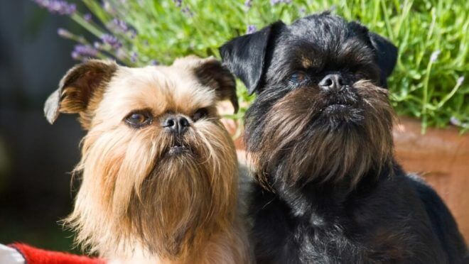 собаки двух цветов