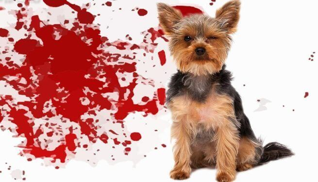 Понос с кровью у собаки причины и лечение