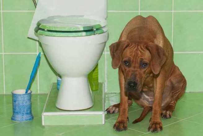 Запор у собаки, что делать