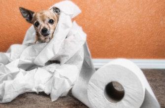 Понос у собаки что делать