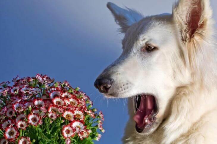 Аллергия у собак на что