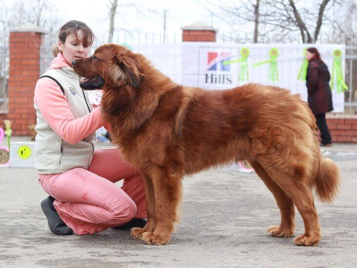 Хотошо-собака хунну