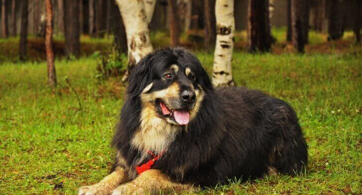 БМВ -собака