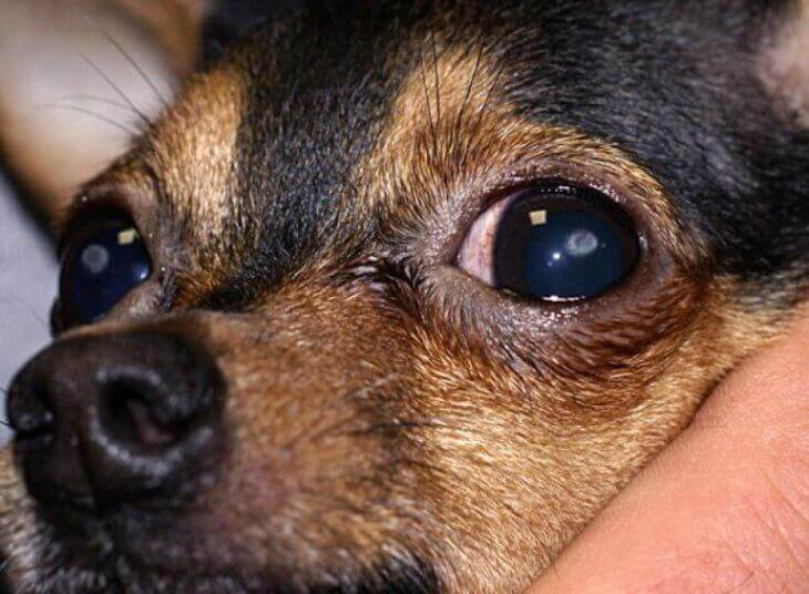 Кератит причина покраснения глаза