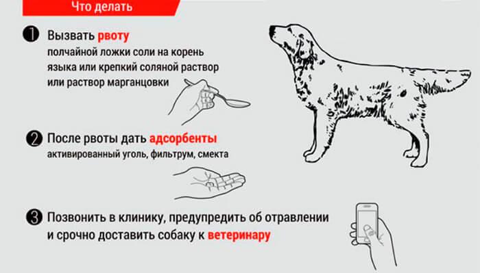 вызвать рвоту у собаки инструкция