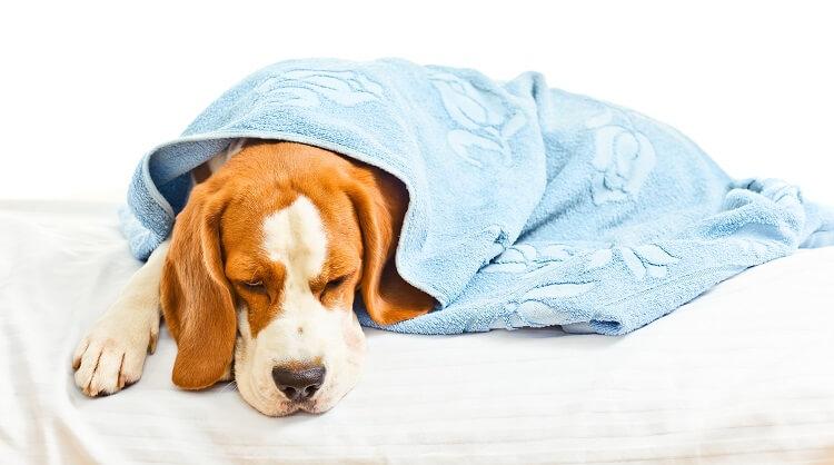 Позывы рвоты у собаки без рвоты